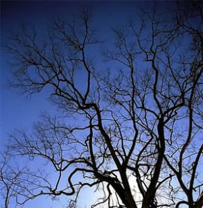 tree-image.jpg